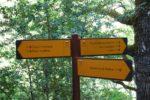 Une photographie d'un mât directionnel Icare avec une flèche pointant à gauche et deux à droite dans un environnement réel, ici une forêt